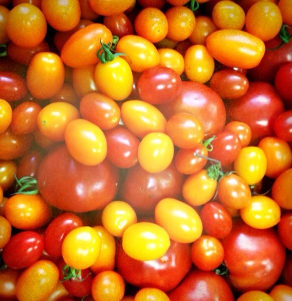 有機小蕃茄
