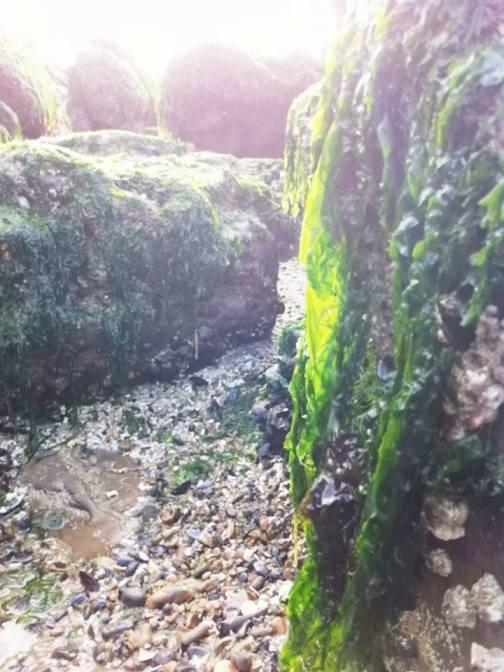 石頭上面蓋滿了海草