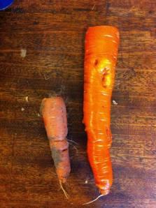 阿嬤家種的大紅蘿蔔