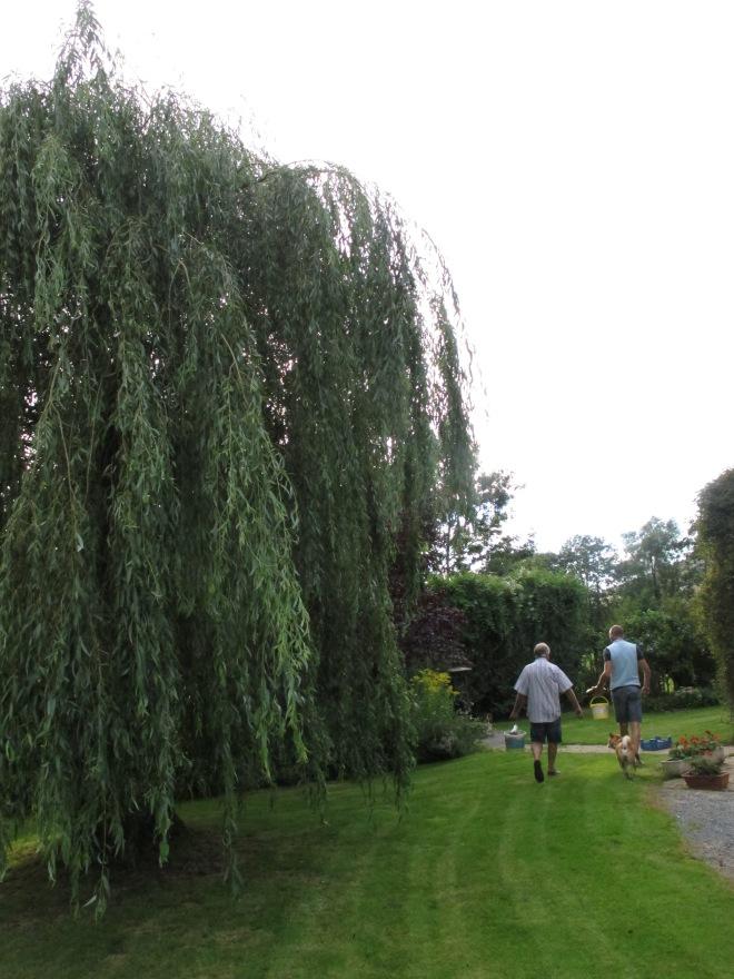 這院子裡有種植 蘋果,黑李,和西洋梨