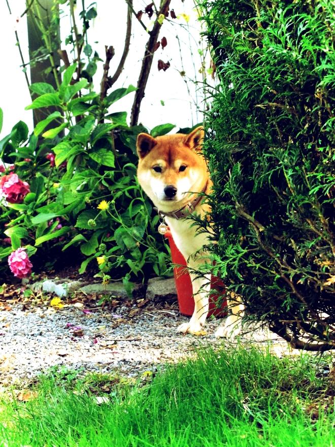 偷看什麼?你是狐狸嗎?