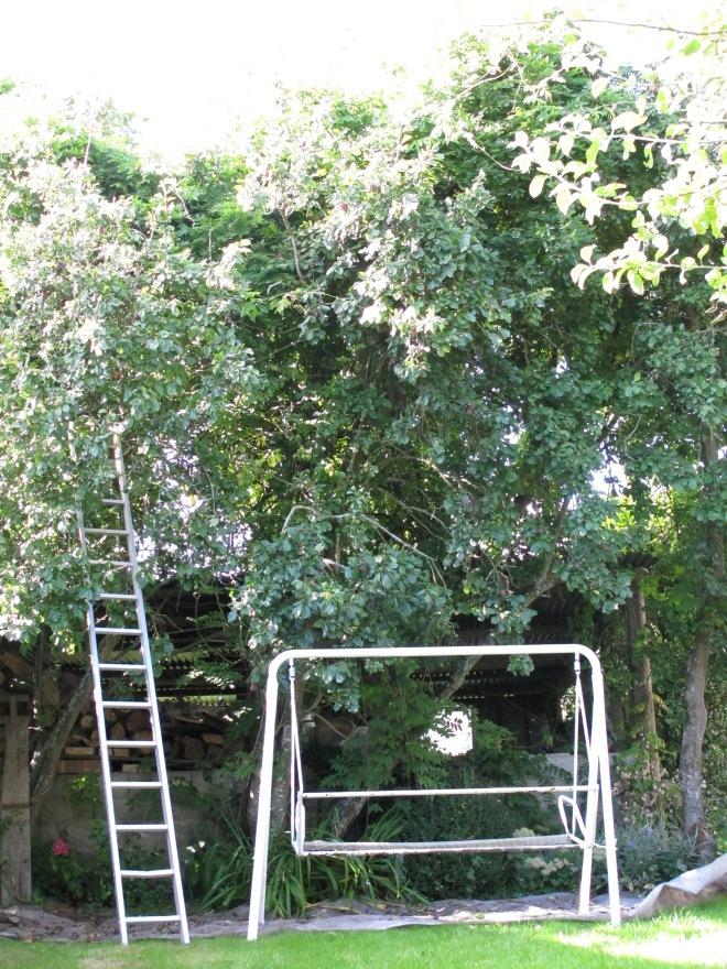 阿嬤家的黑李樹