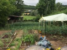 番茄種植初中期