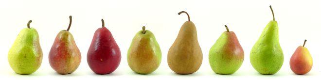 梨子的品種