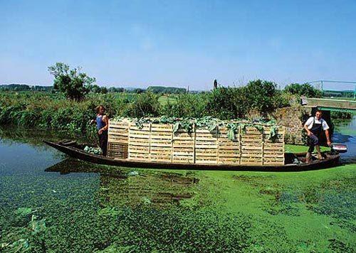 法國農事-白花椰菜&蔬菜節在河川市集La fête du chou-fleur et du légume -6