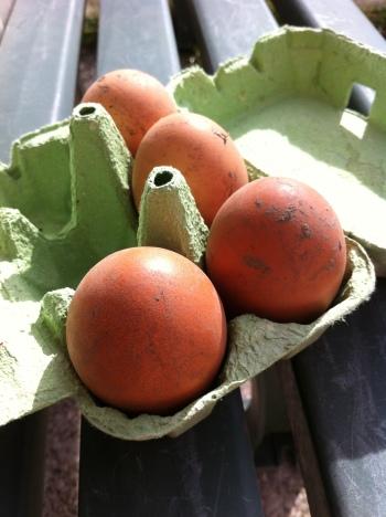 隔壁水蜜桃阿媽家的雞蛋