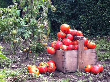 蔬菜在我的罐子裡-無水熬煮番茄醬Sauce tomates-5