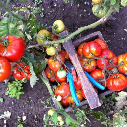 蔬菜在我的罐子裡-無水熬煮番茄醬Sauce tomates