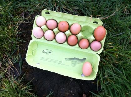 鄰居家阿伯養的雞有生產日期的雞蛋