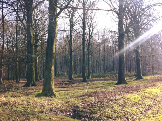 法國鄉村森林