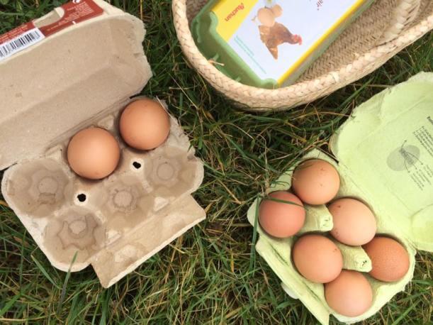 村民的飼養雞蛋