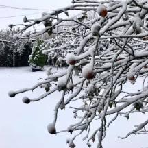 neige12-2017-6